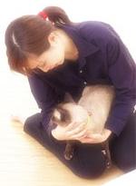 ペット法務(犬や猫の交通事故)
